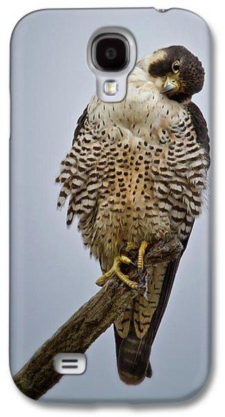 Falcon With Cocked Head Galaxy S4 Case