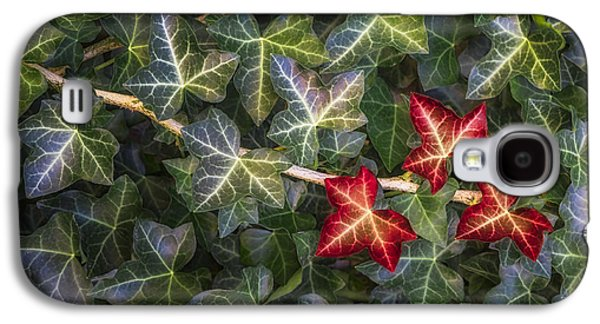 Galaxy S4 Case featuring the photograph Fall Ivy Leaves by Adam Romanowicz