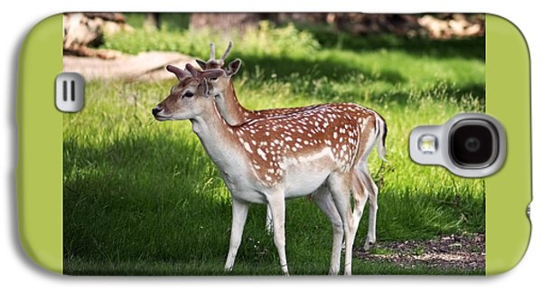Fallow Deer In Richmond Park Galaxy S4 Case by Rona Black