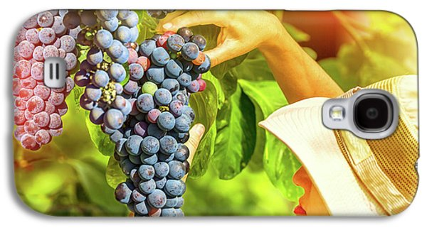 Farmer Checking Grapes Galaxy S4 Case