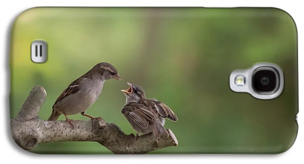 Feeding Time House Sparrows Galaxy S4 Case by Terry DeLuco