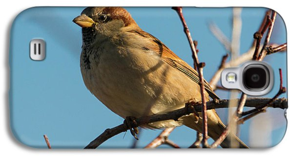 Female House Sparrow Galaxy S4 Case