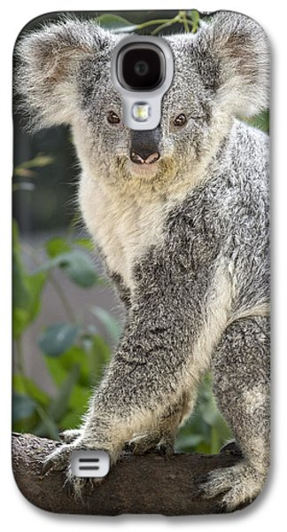 Female Koala Galaxy S4 Case by Jamie Pham