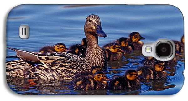 Female Mallard Duck With Chicks Galaxy S4 Case by Panoramic Images
