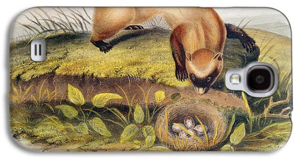 Animals Paintings Galaxy S4 Cases - Ferret Galaxy S4 Case by John James Audubon