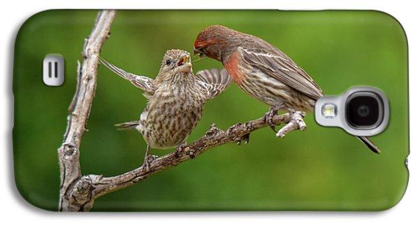 Feeding Young Galaxy S4 Case - Finch Feeding Time I by Linda Brody