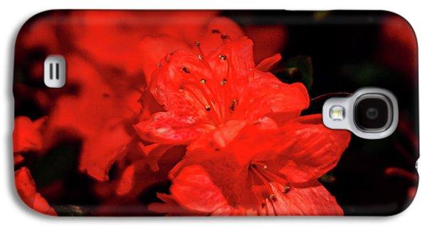 Galaxy S4 Case - Fire Red Azaleas by Tamyra Ayles