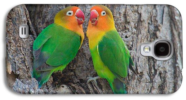 Lovebird Galaxy S4 Case - Fischers Lovebird Agapornis Fischeri by Panoramic Images