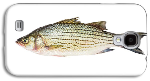Fish Galaxy S4 Case