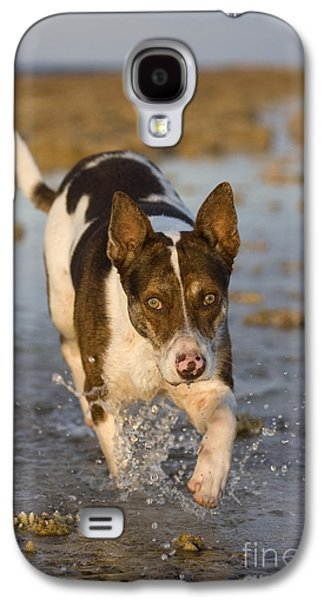 Fishing Dog Of Polynesia Galaxy S4 Case