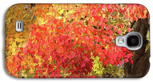 Flaming Autumn 3 Leaves Art Galaxy S4 Case