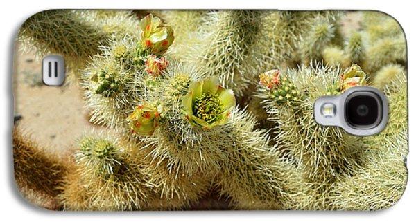 Flowering Cholla Cactus - Joshua Tree National Park Galaxy S4 Case by Glenn McCarthy
