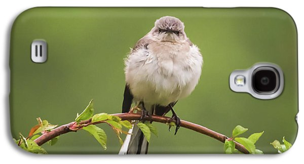 Fluffy Mockingbird Galaxy S4 Case by Terry DeLuco