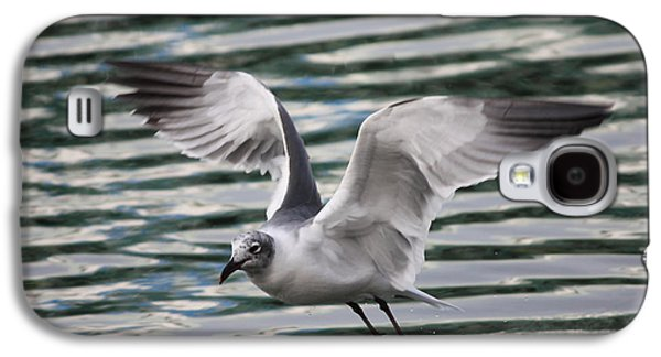 Flying Seagull Galaxy S4 Case by Carol Groenen