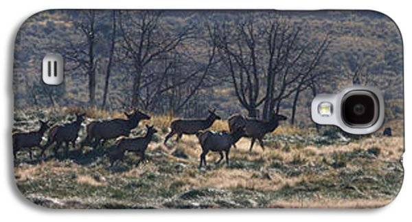 Follow The Leader - Elk In Rut Galaxy S4 Case by Mark Kiver