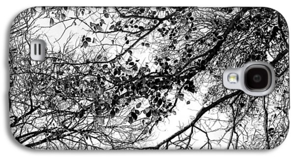 Featured Images Galaxy S4 Case - Forest Canopy Bw by Az Jackson