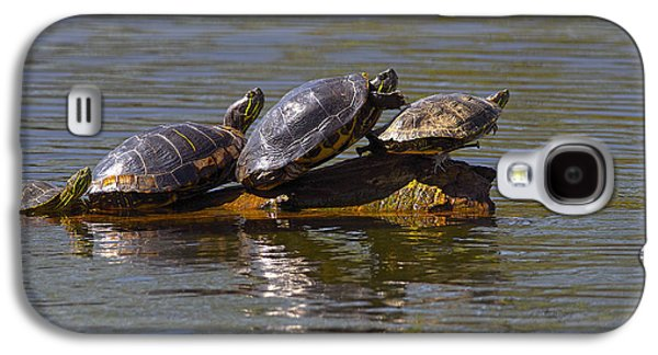 Four Red-eared Slider Turtles Galaxy S4 Case