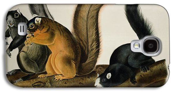 Fox Squirrel Galaxy S4 Case by John James Audubon