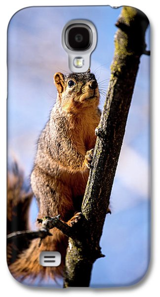 Fox Squirrel's Last Look Galaxy S4 Case by Onyonet  Photo Studios