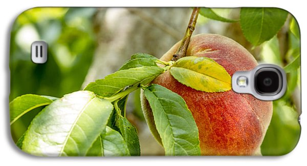 Fresh Peach Hanging In Orchard Galaxy S4 Case by Teri Virbickis