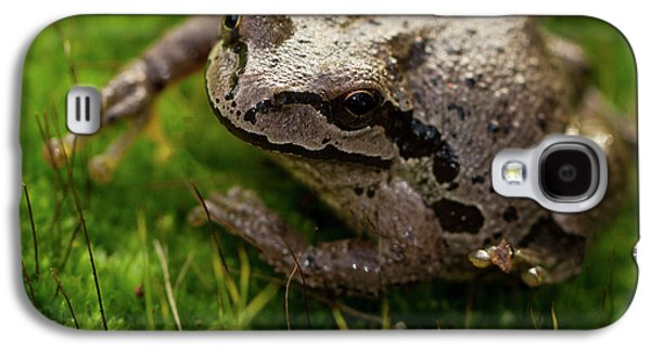 Frog On The Grass Galaxy S4 Case by Jean Noren
