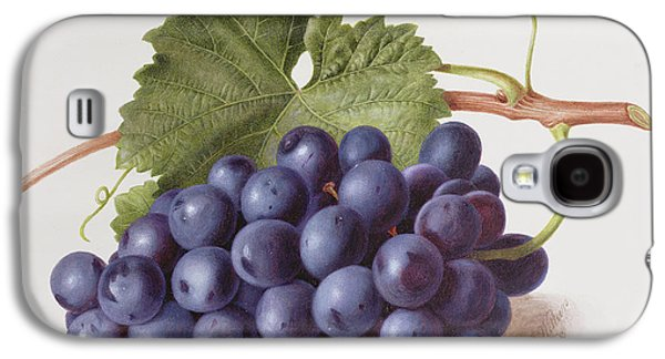 Fruit Of The Vine Galaxy S4 Case by Augusta Innes Withers