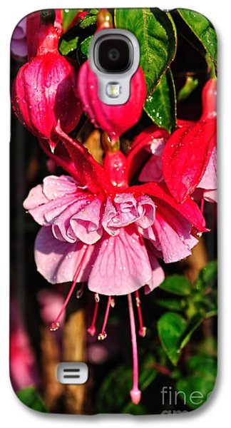 Fuchsias With Droplets Galaxy S4 Case