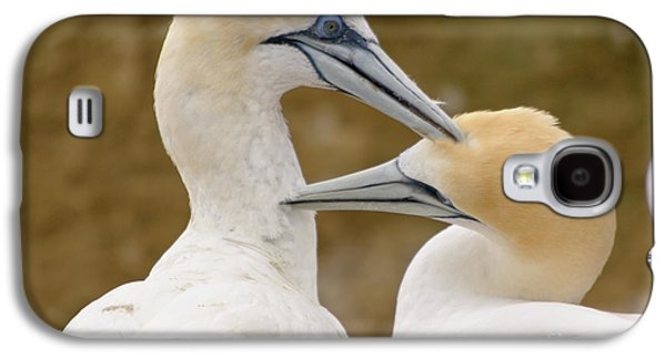 Galaxy S4 Case featuring the photograph Gannet Pair 1 by Werner Padarin