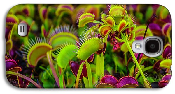 Garden Of Fly Traps Galaxy S4 Case by Garry Gay