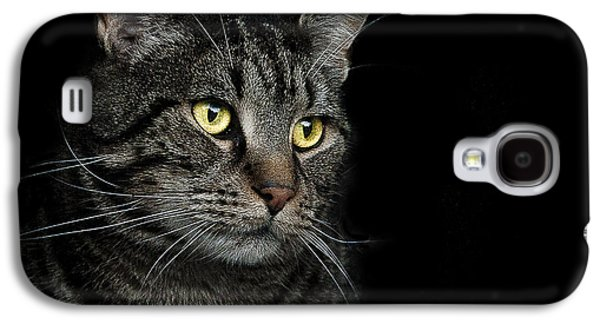 Cat Galaxy S4 Case - Gaze  by Paul Neville