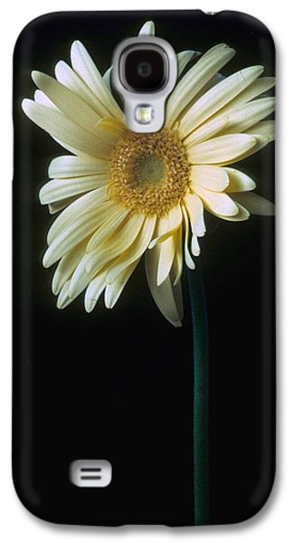 Daisy Galaxy S4 Case - Gerber Daisy by Laurie Paci