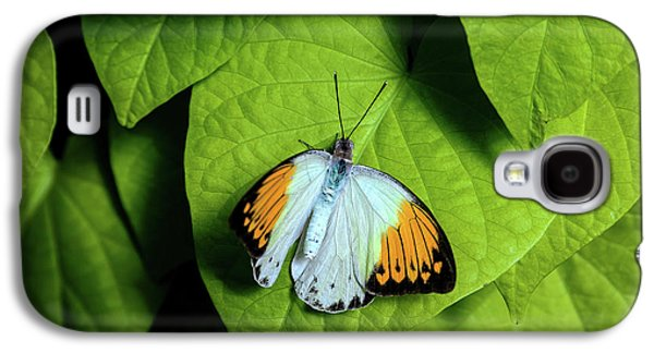 Giant Orange Tip Butterfly Galaxy S4 Case