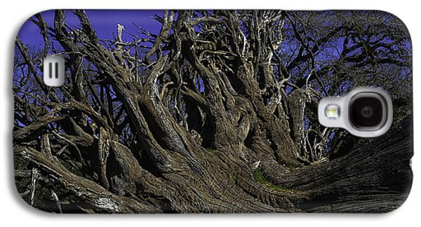 Giant Tree Roots Galaxy S4 Case by Garry Gay