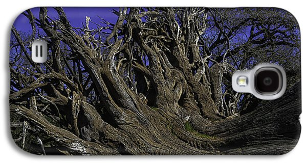 Giant Tree Roots Galaxy S4 Case