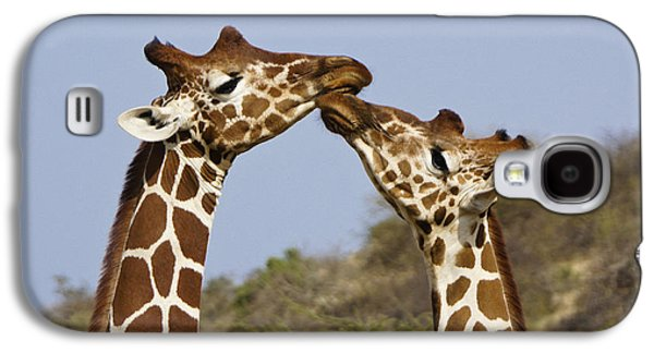 Giraffe Kisses Galaxy S4 Case by Michele Burgess