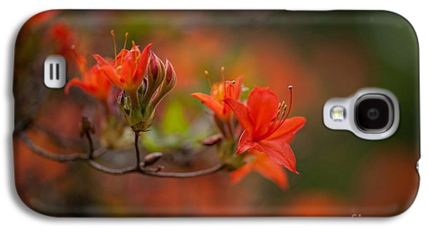 Rhododendron Galaxy S4 Cases - Glorious Blooms Galaxy S4 Case by Mike Reid