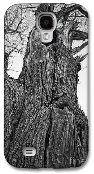 Gnarly Old Tree Galaxy S4 Case