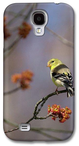 Gold Finch 2017 Galaxy S4 Case