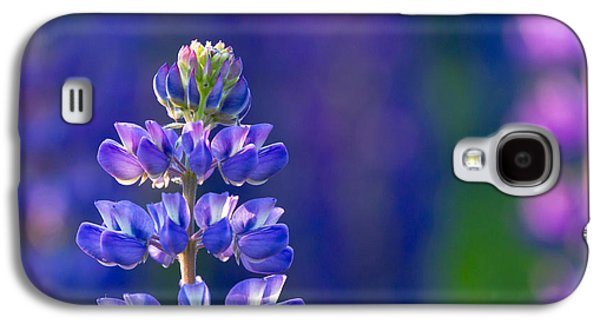 Golden Hour Lupine Galaxy S4 Case by Mary Amerman