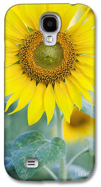 Sunflower Galaxy S4 Case - Golden Sunflower by Tim Gainey