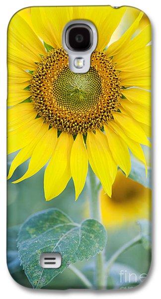 Sunflower Galaxy S4 Case - Golden Sunflower by Tim Gainey
