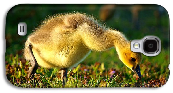 Gosling In Spring Galaxy S4 Case by Paul Ge