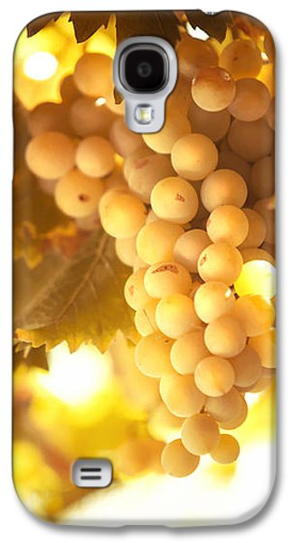 Grapes Filled With Sun Galaxy S4 Case by Jenny Rainbow