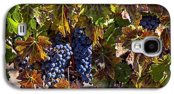 Grapes Of The Napa Valley Galaxy S4 Case by Garry Gay