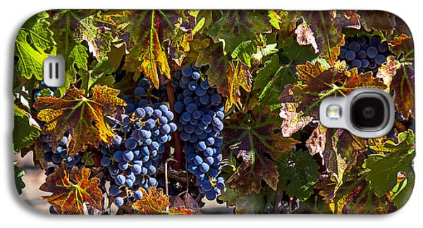 Grapes Of The Napa Valley Galaxy S4 Case