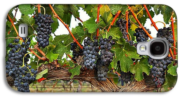 Grapes Of The Yakima Valley Galaxy S4 Case by Lynn Hopwood