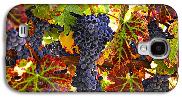 Grape Leaves Galaxy S4 Cases - Grapes on vine in vineyards Galaxy S4 Case by Garry Gay