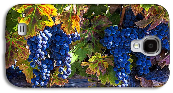 Grapes Ready For Harvest Galaxy S4 Case