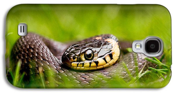 Grass Snake - Natrix Natrix Galaxy S4 Case
