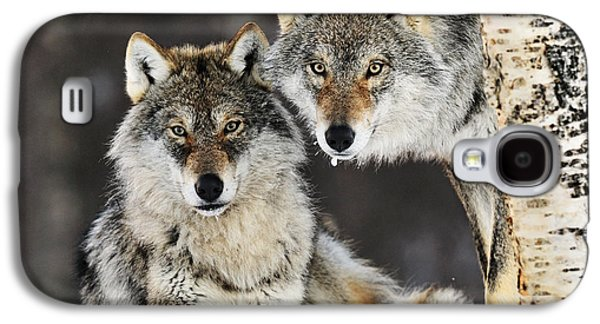 Gray Wolf Canis Lupus Pair In The Snow Galaxy S4 Case